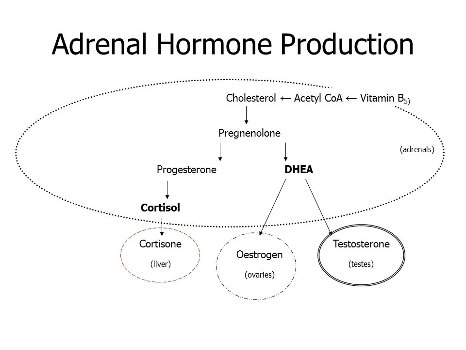 Adrenal Hormone Production