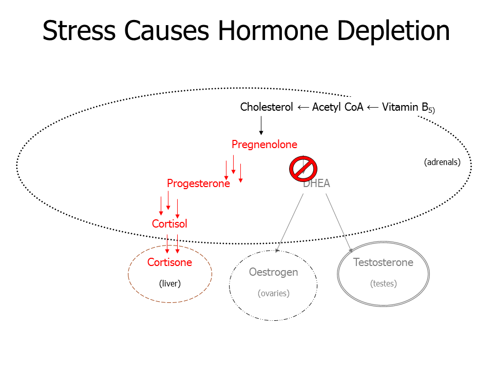 Stress shuts down hormone production